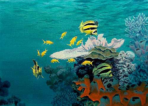 feerie-corallienne